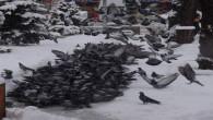 Vatandaşlar açlık çeken kuşlar için yiyecek bırakıyor