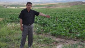 Kar yağışı Yozgat çiftçisini sevindirdi