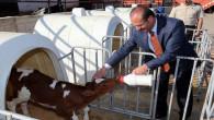 Hayvan işletmelerinin modernizasyonu ve yeni ahır için yüzde 50 hibe