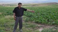 Bir haftadır yağan yağmur Yozgatlı çiftçileri sevindirdi