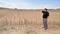 Başkan Yılmaz'dan, çiftçilere dane kaybı uyarısı