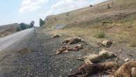 Beton mikseri 15 koyunu telef etti