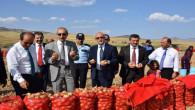 Yozgat'ta soğan hasadı başladı