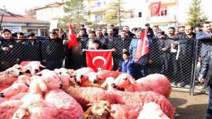 Mehmetçiğe 66 kurbanlık koyun ve iç çamaşırı gönderdiler
