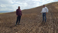 Buğday tarlasına düşen Yıldırım, 15 Dekar alanı kül etti