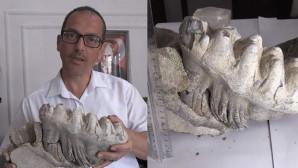 Tarlasını sürerken 8 milyon yıllık çene kemiği fosili buldu