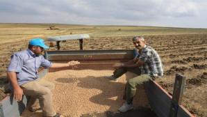 Toprak işlemsiz tarımda nohut ve mercimek hasadı yapıldı