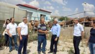 Şarbon hastalığı şüphesi ile Yerköy Canlı Hayvan Pazarı kapatıldı