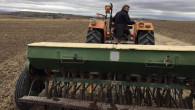 Yozgat'ta çiftçiler buğday ekimine başladı