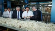 Yozgat Şeker Fabrikası, 420 Bin Ton alım yapacak