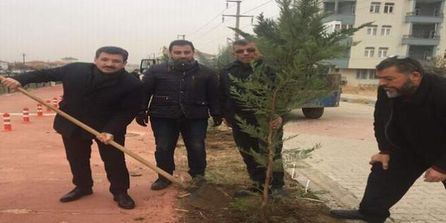 Başkan Yılmaz: Daha yeşil bir Yerköy için çalışmalarımız devam ediyor