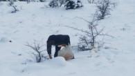 İnfak Derneği, yaban hayvanları için doğaya yiyecek bıraktı