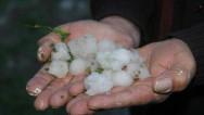 11 bin dekar tarım arazisi doludan zarar gördü