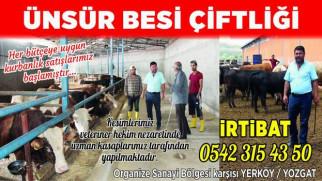 Kurbanlıklarınızı Ünsür Besi Çiftliğinden temin edebilirsiniz
