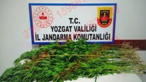 Jandarma'dan yasadaşı kenevir ekimine suçüstü: 2 kişi tutuklandı