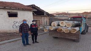 Jandarma ekipleri ağaç hırsızını yakaladı