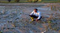 Sel nedeniyle tarım alanları zarar gördü