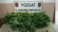 Jandarma'dan uyuşturucu operasyonunda 1 kişi tutuklandı