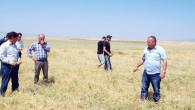 Yozgat'ta 15 Bin dekar ekili tarım arazisi dolu ve yağıştan zarar gördü