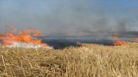 Özdemir: Anız yangını toprağın verimini düşürür