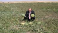 Yozgat'ın kavun ve karpuzu pekmez olacak