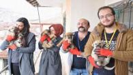 Hayvan koruma ekibi yalnız yaşayan yaşlı adamın evini yeniden dizayn etti