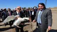 Yozgat'ta yılda 4 bin kaz üretimi yapılacak