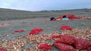 Üreticiler, elde kalan soğanları yol kenarlarına döküyor