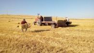 Doğu 'da hasadı Yozgat yapıyor, Urfa, Adana ise Yozgat'ta saman yapıyor