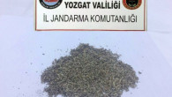 Yozgat Jandarma yol kontrolünde bonzai ele geçirdi