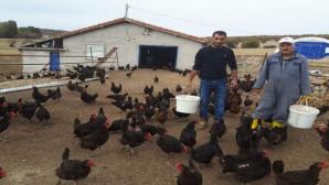 İstanbul'dan gelerek memleketine tavuk çiftliği kurdu