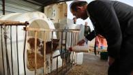 Vali Yurtnaç: İşletmeler arttıkça hayvancılıkta söz sahibi olabiliriz