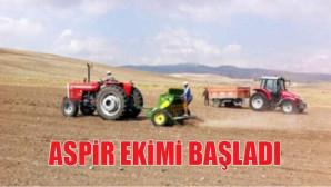 Yozgat'ta çiftçiler aspir ekimine başladı