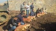 Yozgat'tan gönderilen kınalı koyunlar Mehmetçiklere ulaştırıldı