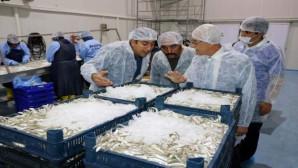 Yozgat'tan Avrupa ülkelerine 400 Ton balık ihraç ediliyor