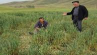 Yozgat'ta dolu, tarım alanlarına zarar verdi