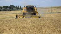 Deneme amaçlı ekimi yapılan buğday ve arpanın hasadı yapıldı