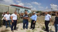 Yozgat'ta çiftçilere 550 büyükbaş sığır dağıtımı yapıldı