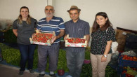 Yozgat'ta çilek üretimi yaygınlaştırılıyor