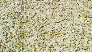 Kayseri Şeker, kabak çekirdeği başfiyatını 11,5 TL olarak belirledi