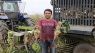Yozgat'ta pancar sökümü devam ediyor
