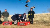 Sırçalı'da keklikler doğaya salındı