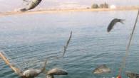 Su ürünleri av yasağı 1 Nisan'da başlıyor