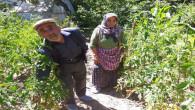 Yaşlı çift, hobi olarak üretiyor komşularınada ücretsiz dağıtıyor