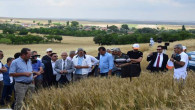 Yerel Buğday Projesi Tarla Günü yapıldı