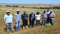 5 ilçede Yağlık Çörekotu hasadı yapıldı
