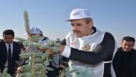 Yozgat Belediyesi 7 Bin 500 fidanı toprakla buluşturdu