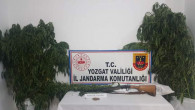 Jandarma ekipleri, 51 kök kenevir bitkisi ele geçirdi