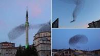 Yozgat'ta sığırcık kuşlarının dansı Çin Gazetesine haber oldu