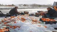 Devrilen TIR'dan dökülen 20 ton portakalı vatandaşlar topladı
